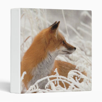 Cute Lil red fox school binder