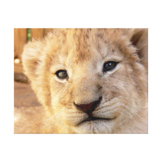 Cute Lion Cub Gallery Wrapped Canvas