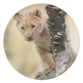 Cute lion cub dinner plate
