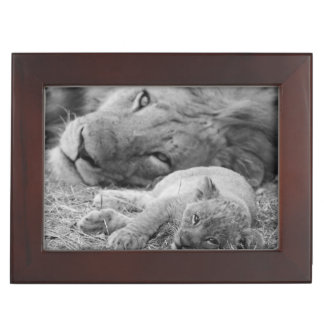 Cute Lion Cub Resting With Father Memory Box