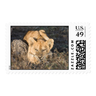 Cute Lion Postage Stamps
