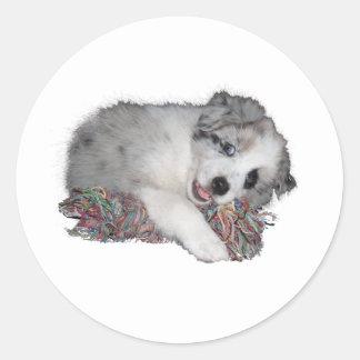 Cute littel border collie pup classic round sticker