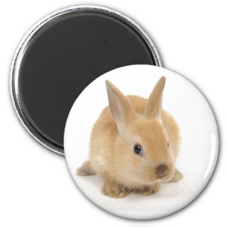 cute_little_babies_9 BABY BUNNY RABBIT CUTE FURRY 2 Inch Round Magnet