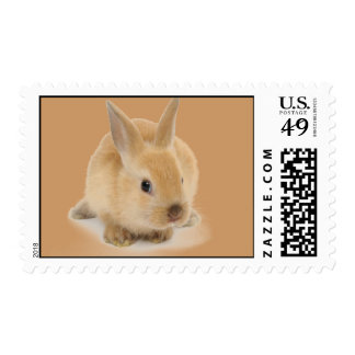 cute_little_babies_9 BABY BUNNY RABBIT CUTE FURRY Postage