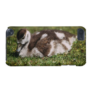 Cute Little Baby Goose, Gosling In Grass iPod Touch (5th Generation) Case