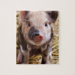 Cute little Baby Piglet Jigsaw Puzzles