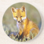"cute little baby red fox sandstone coaster<br><div class=""desc"">cute little baby red fox</div>"