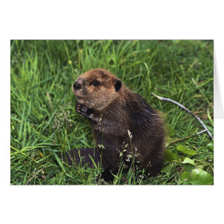 Cute Little Beaver Card