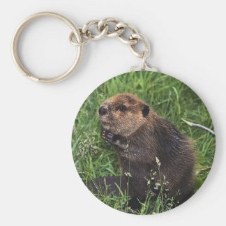Cute Little Beaver Keychain