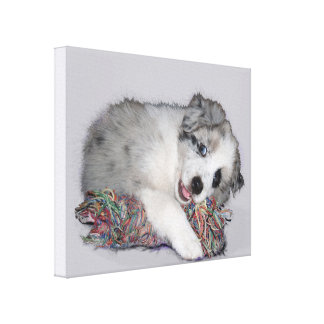 cute little border collie puppy canvas print