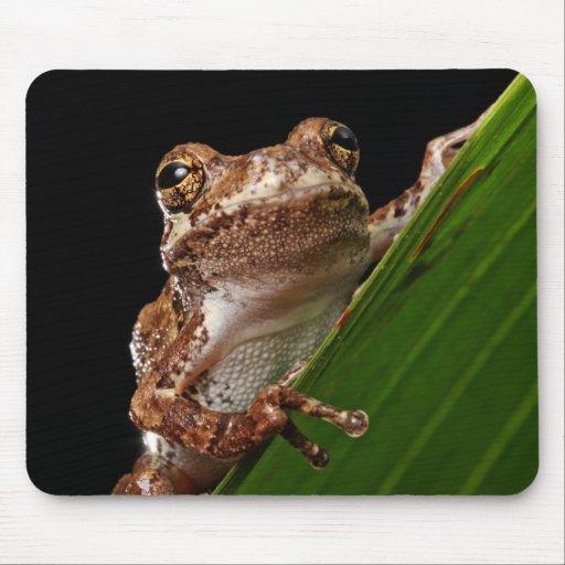 Cute Little Brown Frog Mousepad
