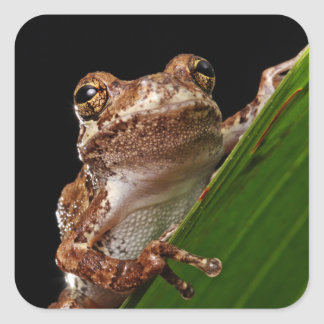 Cute Little Brown Frog Square Sticker