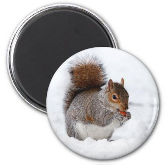 Cute little brown squirrel in snow magnet