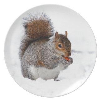 Cute little brown squirrel in snow plates