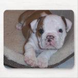 Cute Little Bulldog Puppy Mousepad