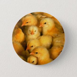 Cute Little Chicks Button