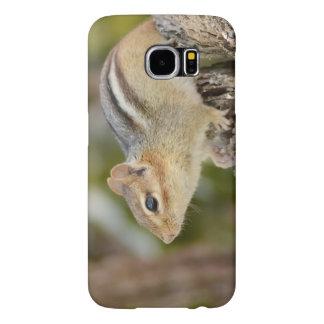 Cute Little Chipmunk Sitting on a Stump Samsung Galaxy S6 Cases