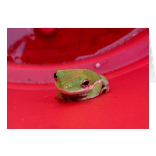 Cute Little Coy Frog Greeting Card