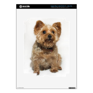 Cute Little Dog iPad 3 Skin