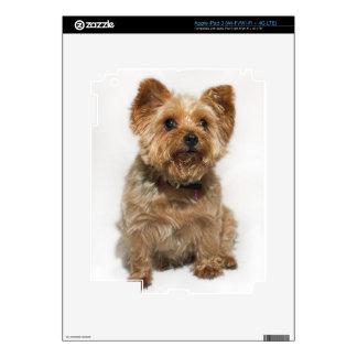 Cute Little Dog iPad 3 Skin