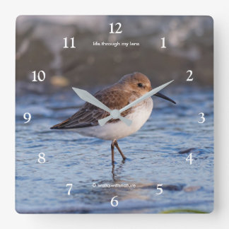 Cute Little Dunlin on the Beach Square Wall Clock