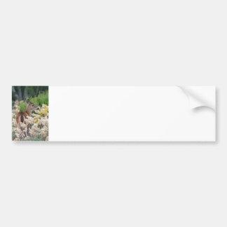 Cute Little Fawn Bumper Sticker