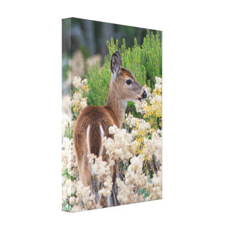 Cute Little Fawn Canvas Print