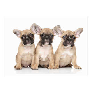 Cute little French Bulldogs Large Business Cards (Pack Of 100)