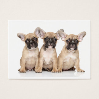 Cute little French Bulldogs Business Card