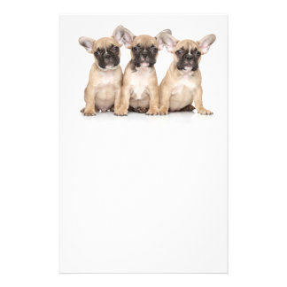 Cute little French Bulldogs Flyer