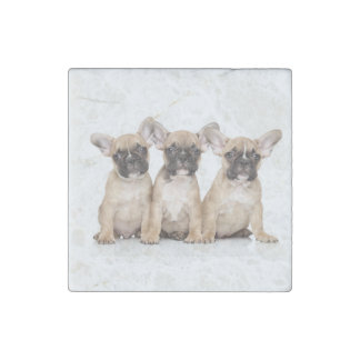 cute little French Bulldogs Stone Magnet