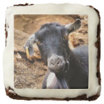 goats, farm animals, animals, farms, cute, nature,