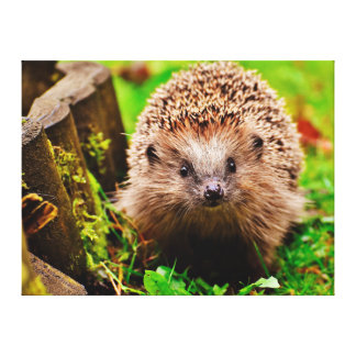 Cute Little Hedgehog in the Forest Canvas Print