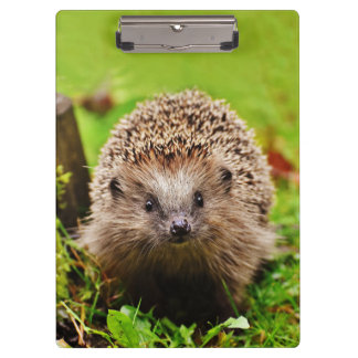 Cute Little Hedgehog in the Forest Clipboard