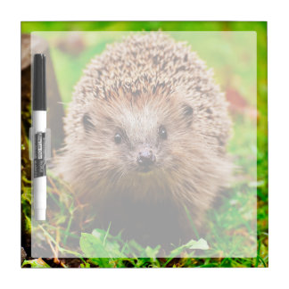 Cute Little Hedgehog in the Forest Dry-Erase Board