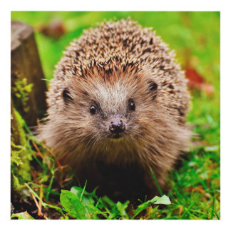 Cute Little Hedgehog in the Forest Panel Wall Art