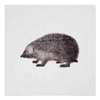 Cute Little Hedgehog Poster