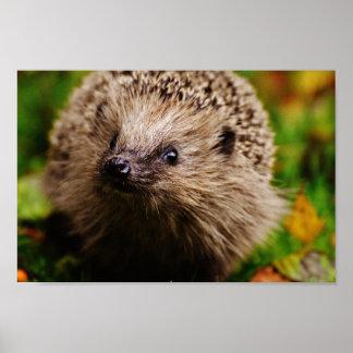 Cute little hedgehog poster