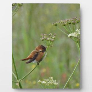 Cute little Hummingbird Plaques
