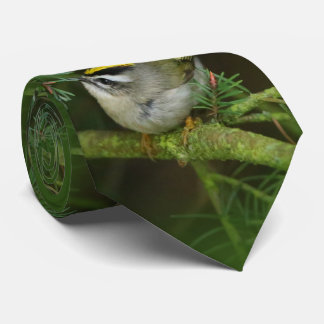 Cute Little Kinglet Causes a Stir in the Fir Neck Tie