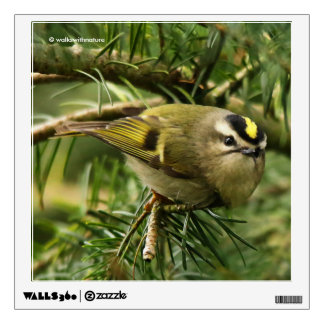 Cute Little Kinglet Causes a Stir in the Fir Wall Sticker