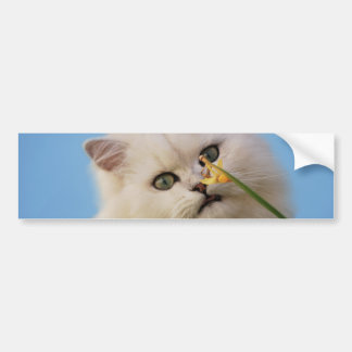 Cute little Kitten Bumper Sticker