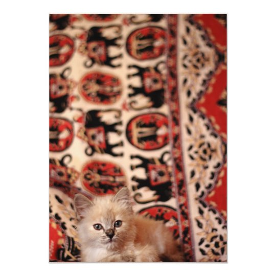 Cute Little Kitten Card