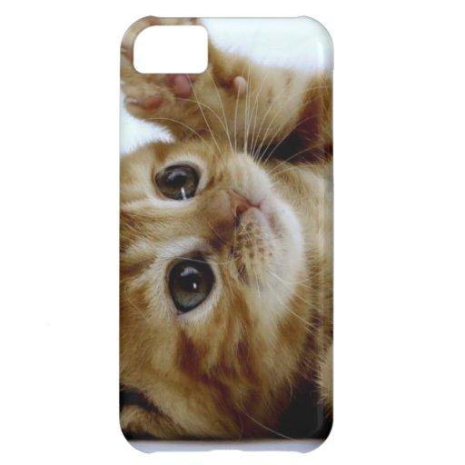 cute little kitten cat pet ginger tabby case for iPhone 5C