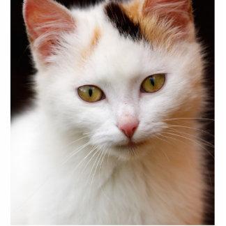 Cute Little Kitten Cutout
