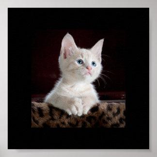 Cute little kitten looking up poster