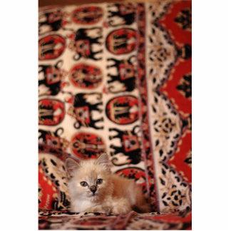 Cute Little Kitten Statuette