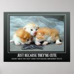 Cute Little Kittens Poster