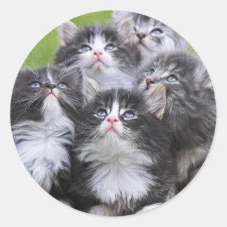 Cute little kittens round sticker