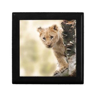CUTE LITTLE LION CUB RANGE GIFT BOX